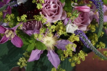 Clematis: Sommerfeeling